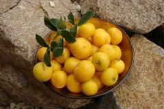Ripe-fruit-of-Kei-apple