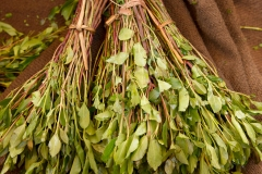 Bunch-of-Khat