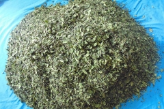 Dried-leaves-of-Khat