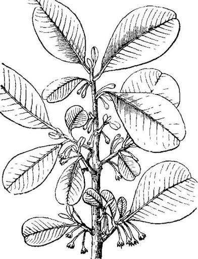 Sketch-of-Khirni