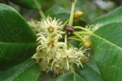 Flowers-of-Khirni