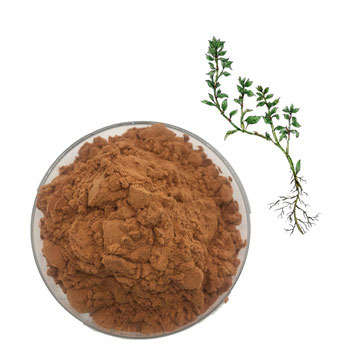 Knotgrass-Extract