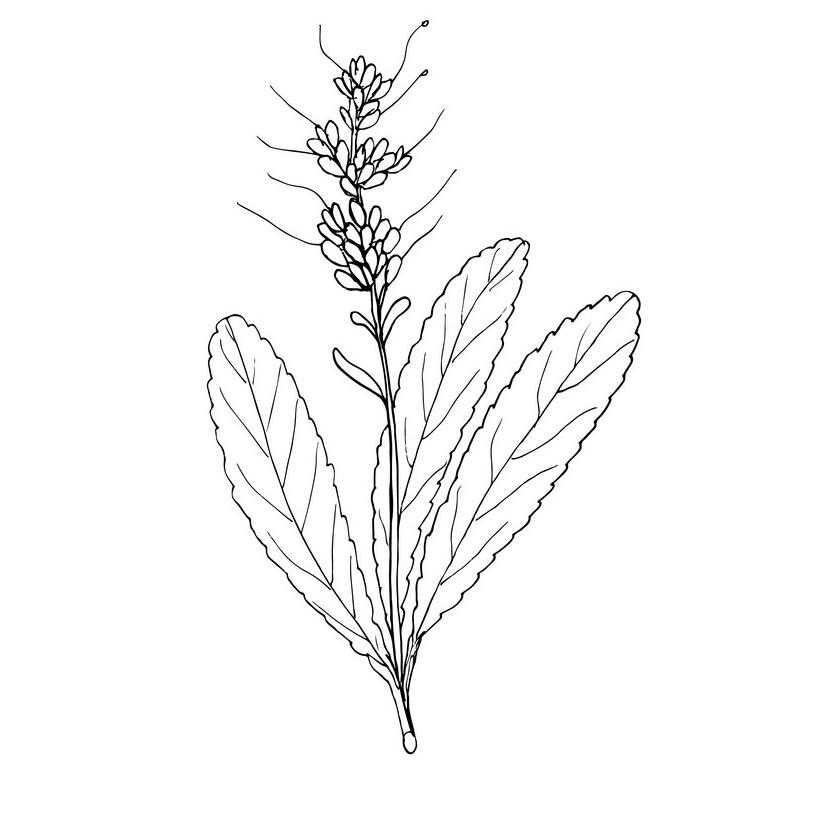 Sketch-of-Kutki