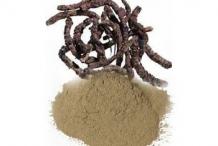 Kutki-Powder