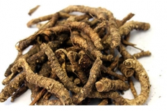 Dried-kutki-root