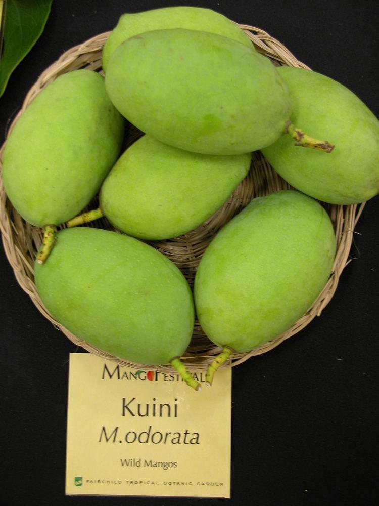 Kwini-Mango
