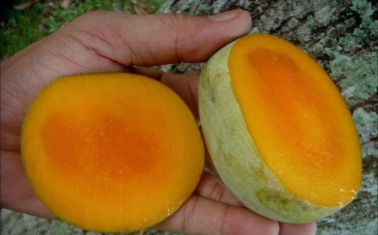 Slices-of-Kwini-mango
