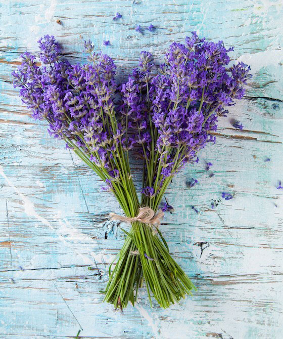Bunch-of-lavender