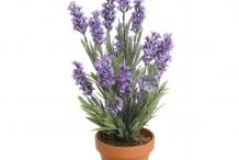 Lavender-Plant-In-Pot