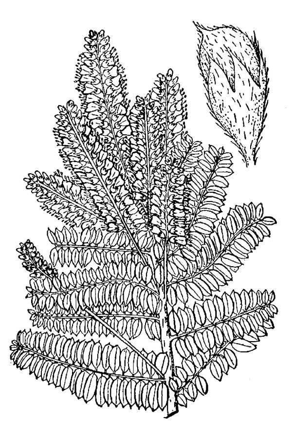 Sketch-of-Lead-plant