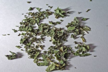 Dried-Leaves-of-Lemon-Balm
