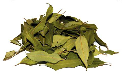 Dried-Leaves-of-Lemon-myrtle