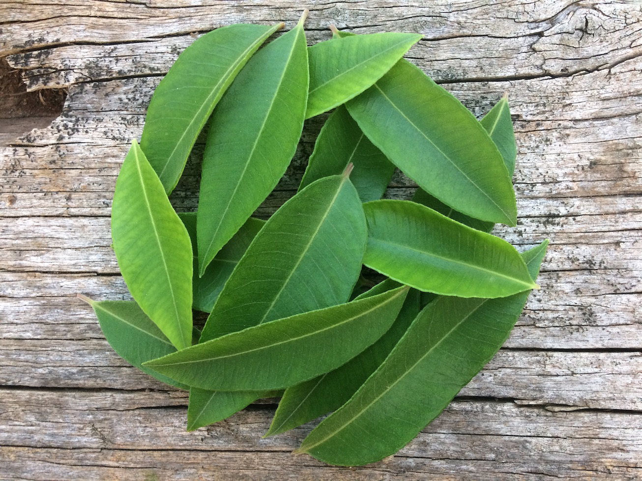 Lemon-myrtle-leaves