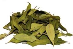 Dried-Leaves-of-Lemon-myrtle