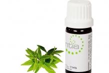 Lemon-Verbena-essential-oil