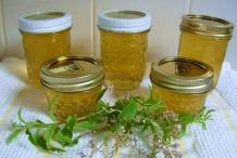Lemon-Verbena-jam