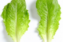 Lettuce-leaves