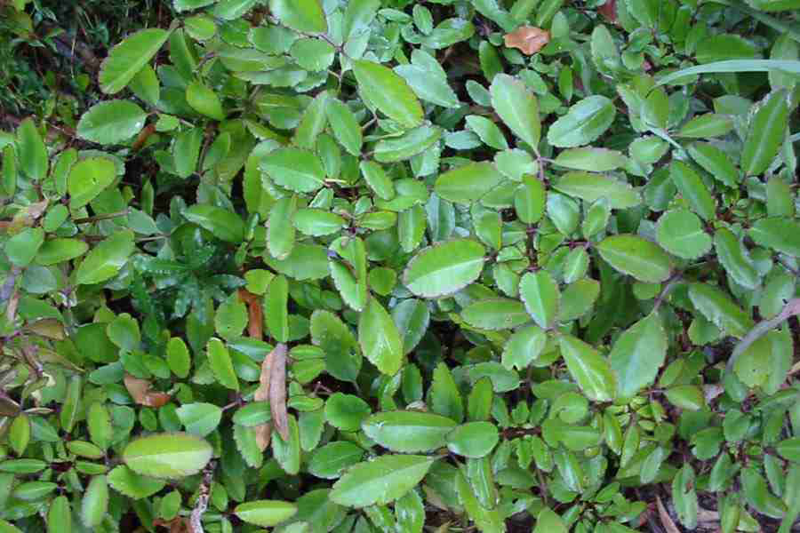 Life-plant-Bushes