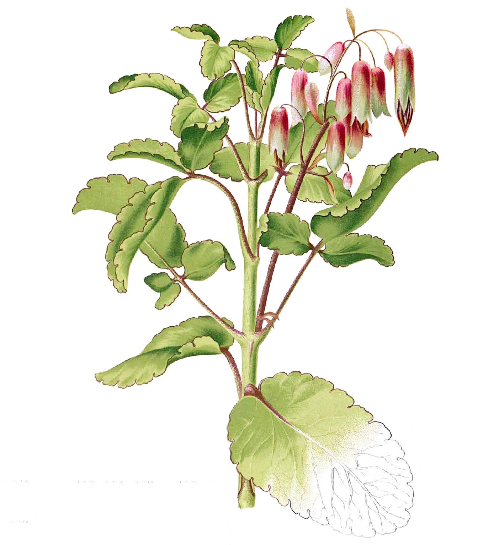 Life-plant's-Illustration