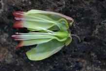 Half-cut-Flower