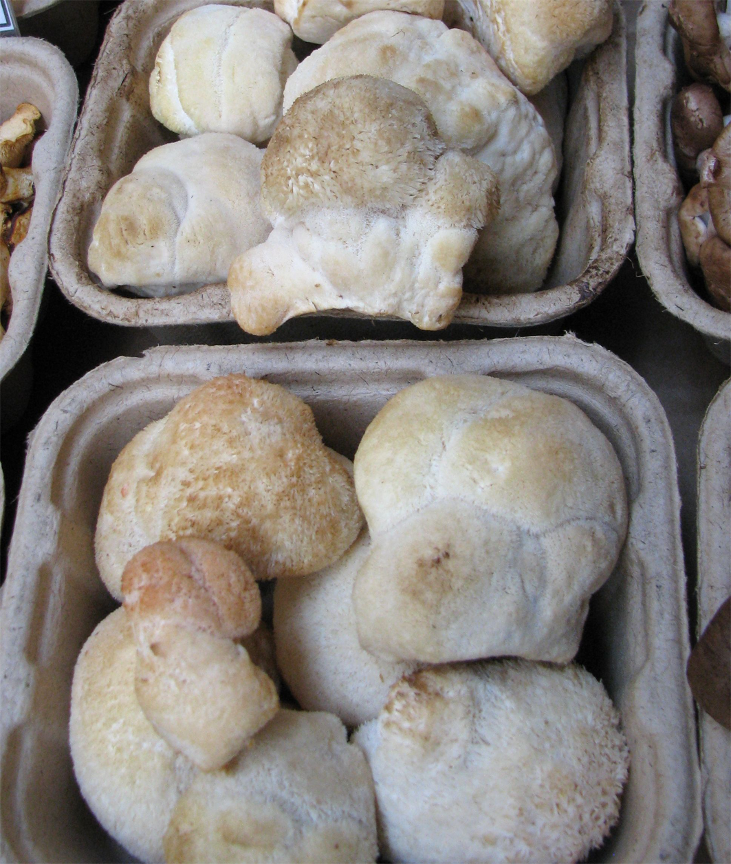 Lion's-mane-mushroom-sold-in-market