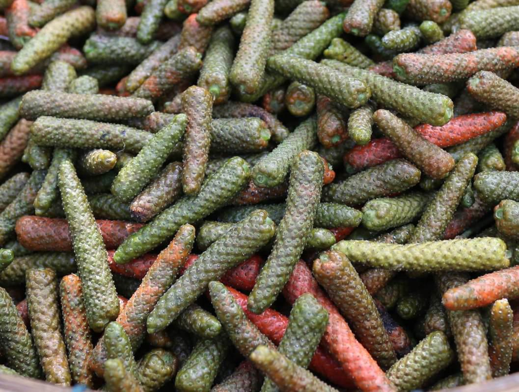 Long-Pepper-harvested