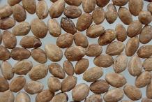 Seeds-of-Lotus-tree-fruit