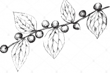 Sketch-of-Lotus-tree