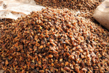 Mahua-for-sale-in-local-market