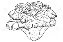 Sketch-of-Maitake-Mushroom