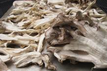 Pieces-of-Maitake-Mushroom