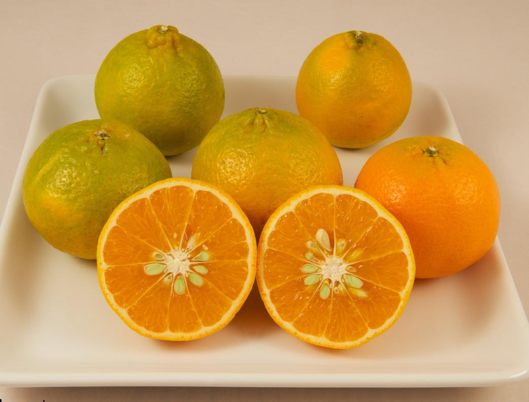 Half-cut-Mandarin-orange