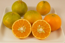 Half-cut-Mandarin-orange