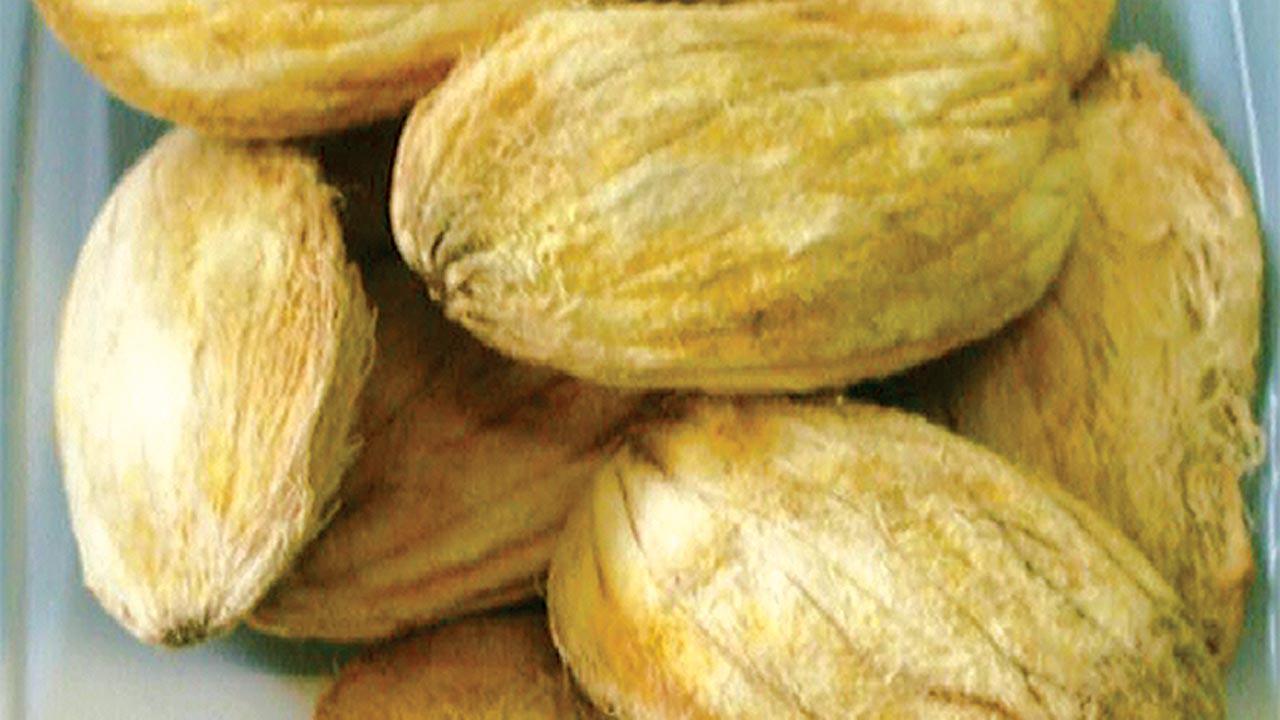 Mango-seed-11