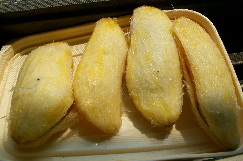 Mango-seed-2