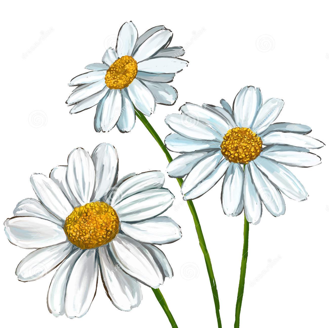 Sketch-of-Marguerite-Daisy