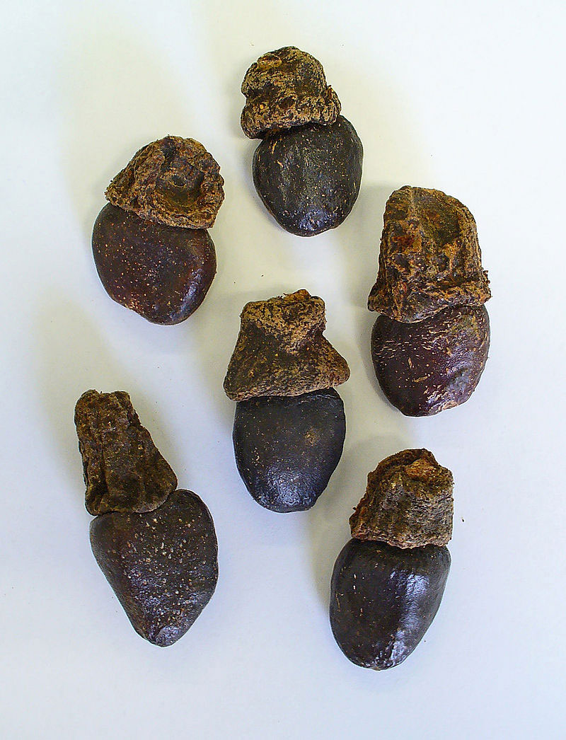 Dried-Fruits-of-Marking-Nut