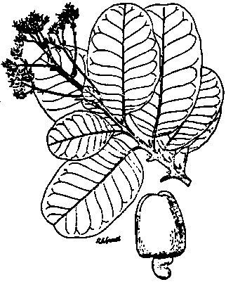 Sketch-of-Marking-Nut