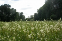 Meadowsweet-farm