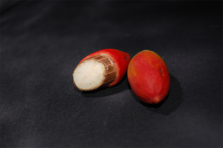 Melinjo-fruit-cut