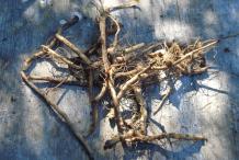 Milk-Thistle-Root