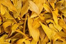 Dried-leaves-of-Mistletoe