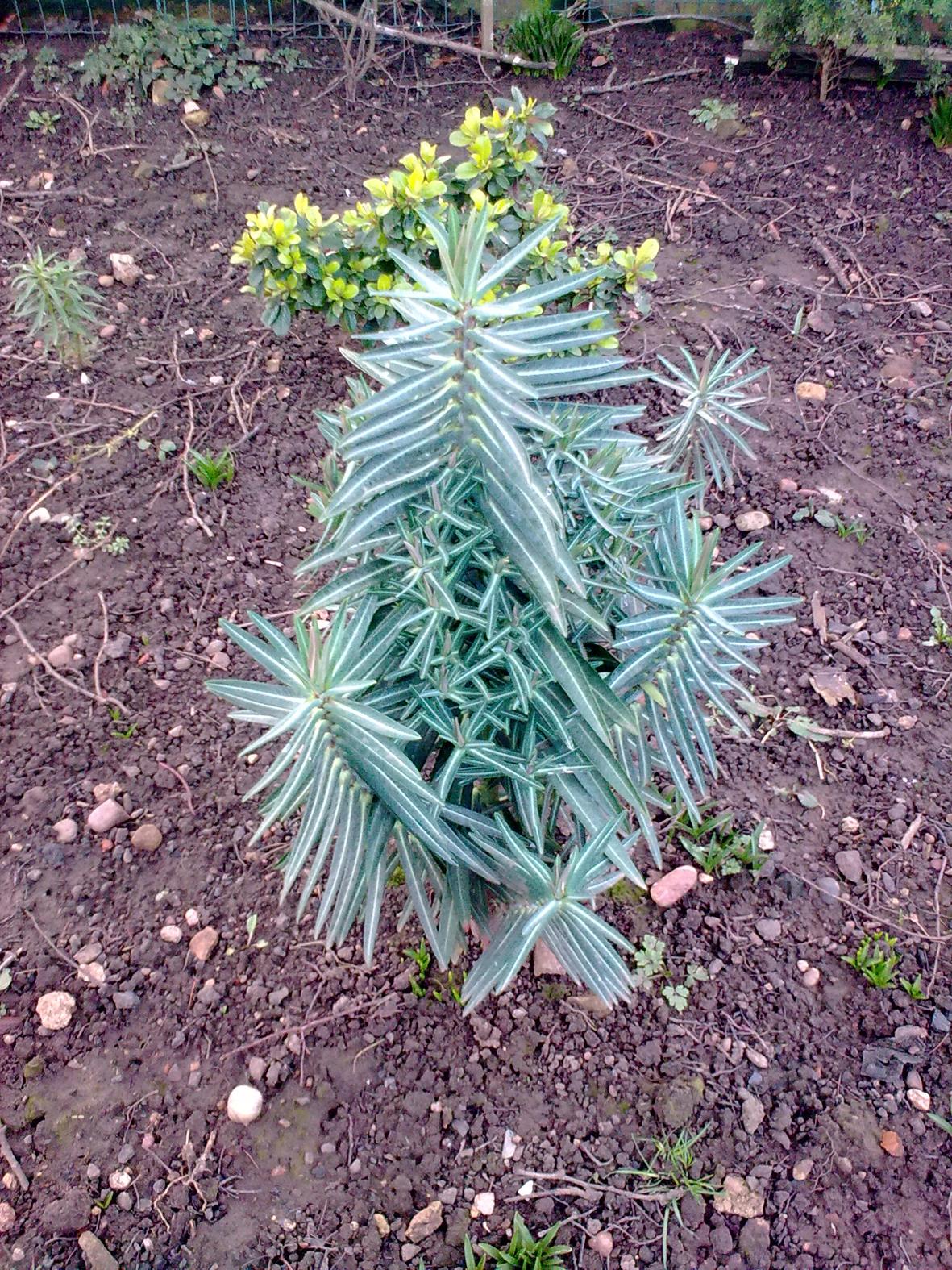 Mole-plant