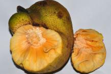 Half-cut-Monkey-Fruit