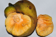 Half-cut-Monkey-Fruit