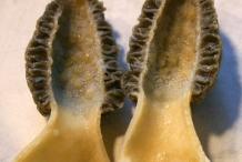 Half-cut-Morel-mushroom
