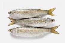 Mullet-fish-4