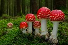 Mushroom-3
