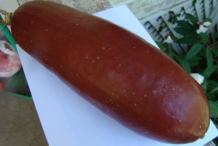 Musk-Cucumber