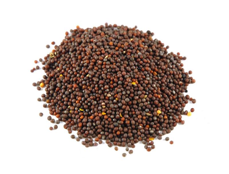 Seeds-of-Mustard-greens